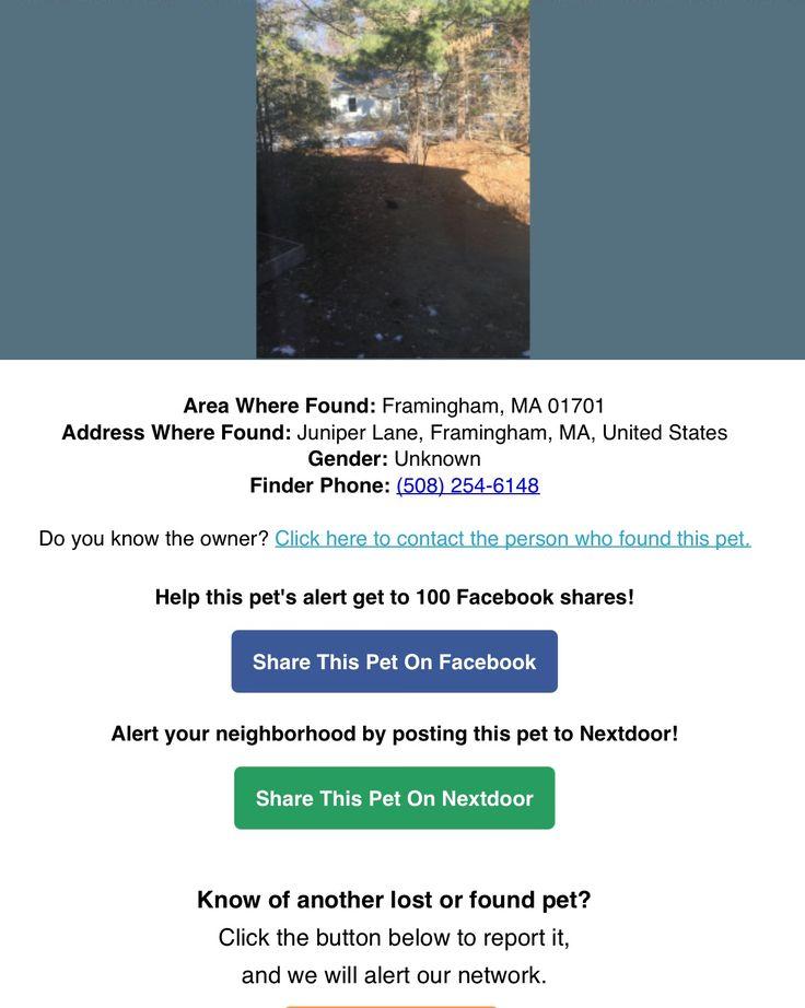 Found Black Cat: Framingham, MA