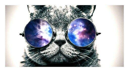 Kitty :))
