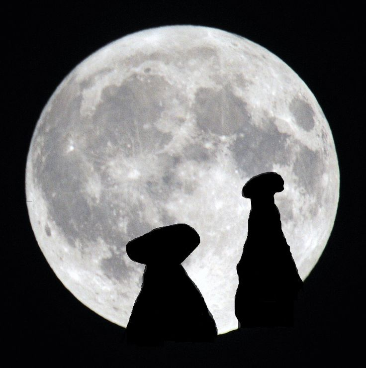 Walk for support; our 2016 Non profit Full Moon walks has been published...