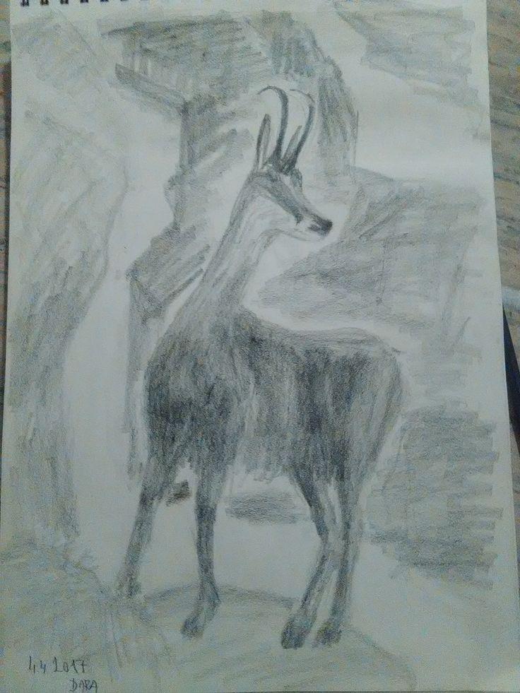 kamzík - kresba ceruzkou