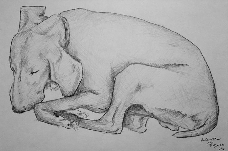 Not a colored pencil drawing, just a sketch of my baby Bucky 🐾🐾