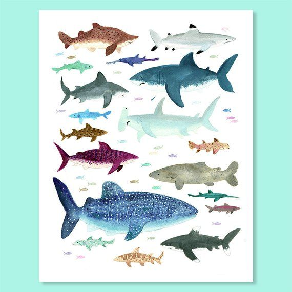 Shark Shiver Print Etsy Shark Painting Prints Gouache Painting