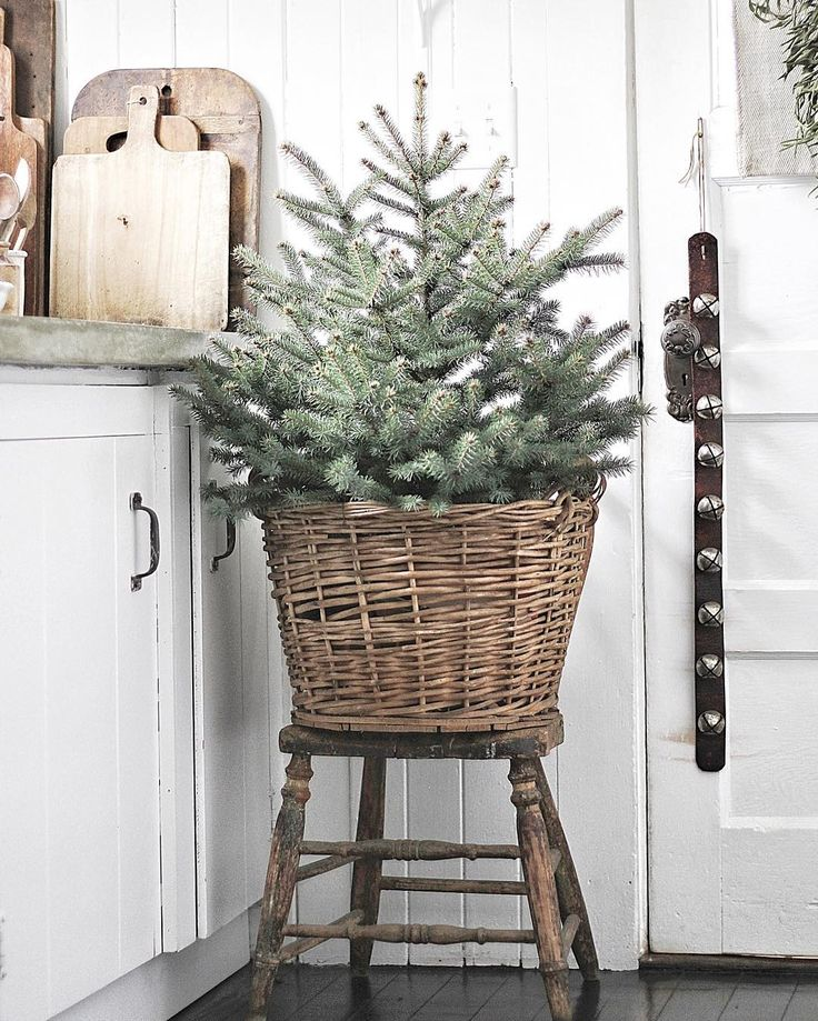 I love being greeted by jingle bells & a cheery little tree every time I walk in the door of the farmhouse, I could get too used to this! ☺️ Anyone else feel like that about their holiday decor? Have a great weekend my friends!