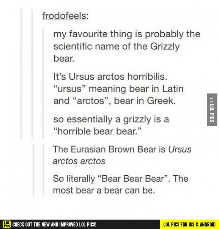 Bear bear bear funny pics, funny gifs, funny videos, funny memes, funny jokes. LOL Pics app is for iOS, Android, iPhone, iPod, iPad, Tablet