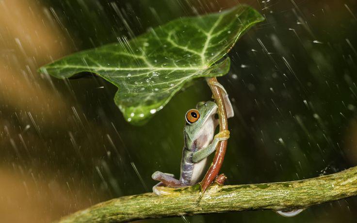 Időjós állatok – 23 népi megfigyelés, ami esőt jelez