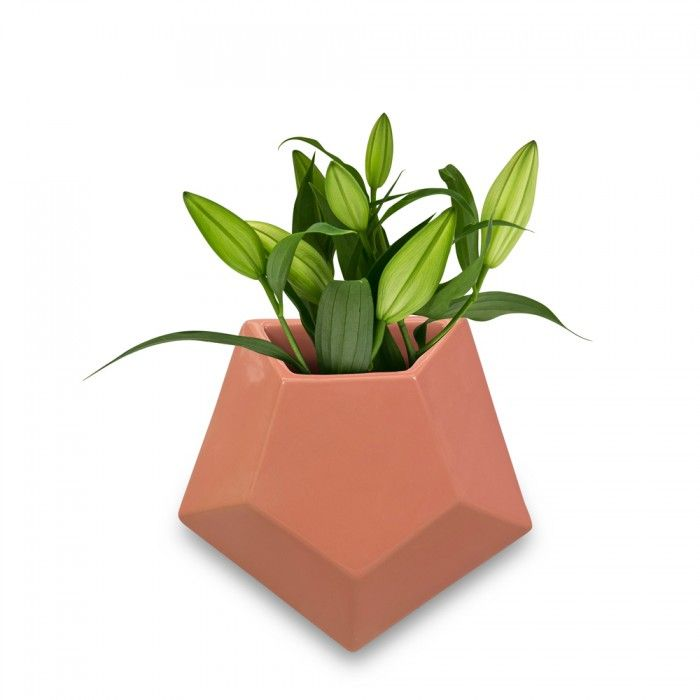 Peach Pentagon Wall Planter Medium | As Seen On The Block NZ | Trends   Me