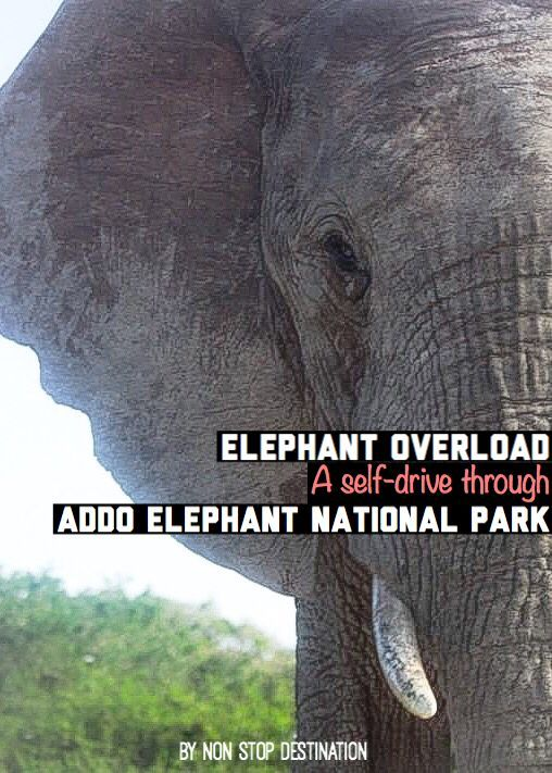 Elephant overload: A self-drive experience through Addo Elephant National Park in South Africa