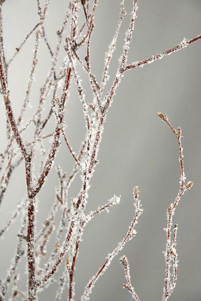 Natural Birch Branches with Glitter and Snow 3 to 4 foot tall - 5 branches for $6.20