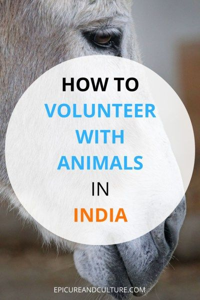 Volunteering Abroad In India With Animals | India Travel Guide