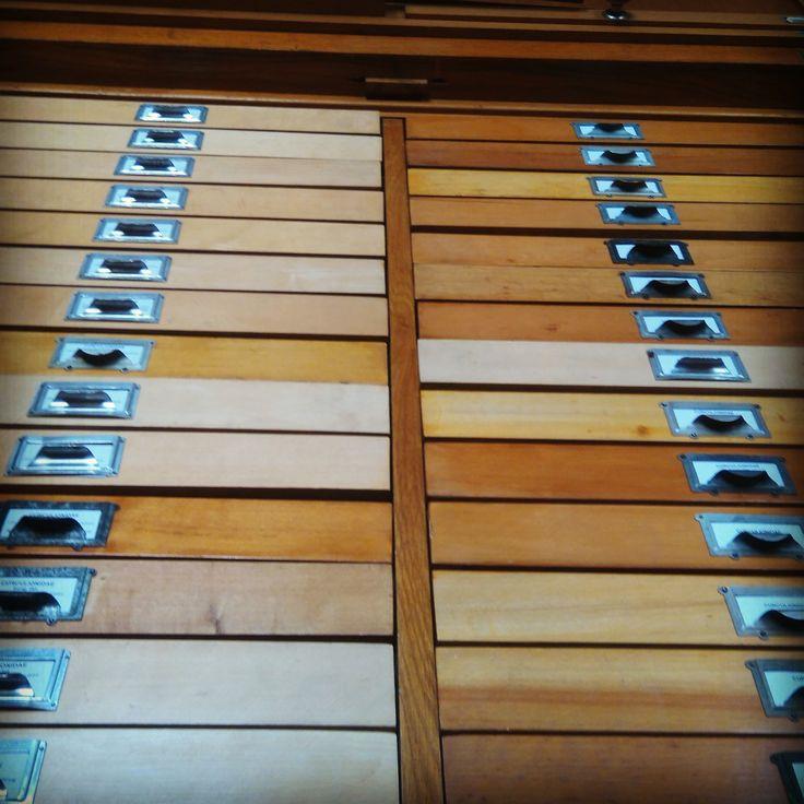 Bogárgyűjtemény Coleoptera Collection