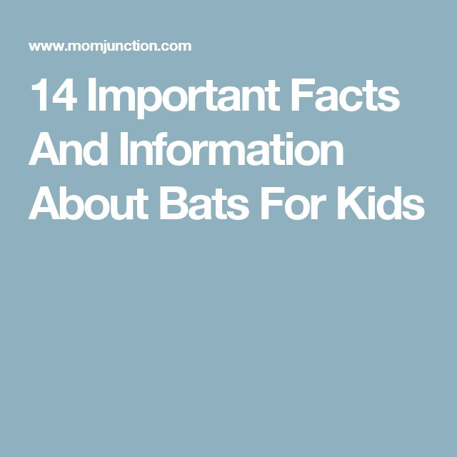 14 Important Facts And Information About Bats For Kids