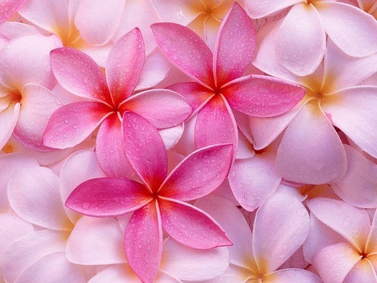 Imagenes de Paisajes: hermosos con flores