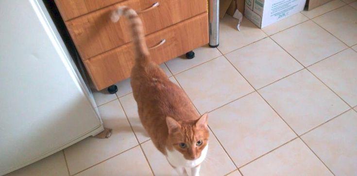 cat fursuit head base