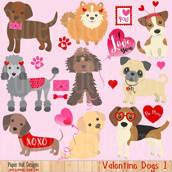 The 25+ best Valentine dog ideas on Pinterest | Valentines day dog ...