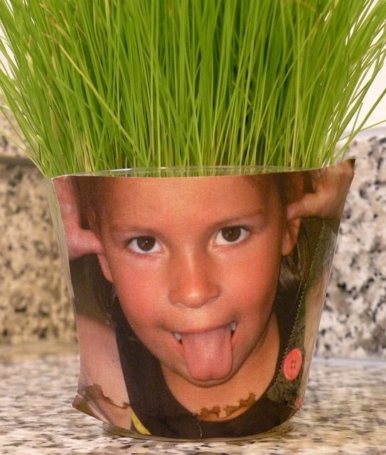 """Oh, now this is the cutest I have seen for growing wheat grass. Then they can give their """"hair"""" a trim!"""