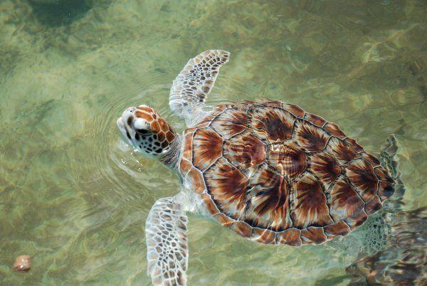 Islas Caimán | ¡El Blog.info!