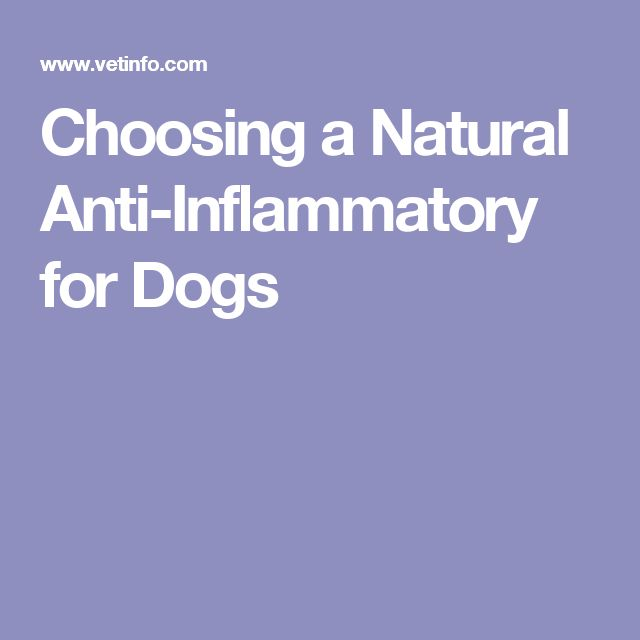 Anti Inflammatory Foods Safe For Dogs