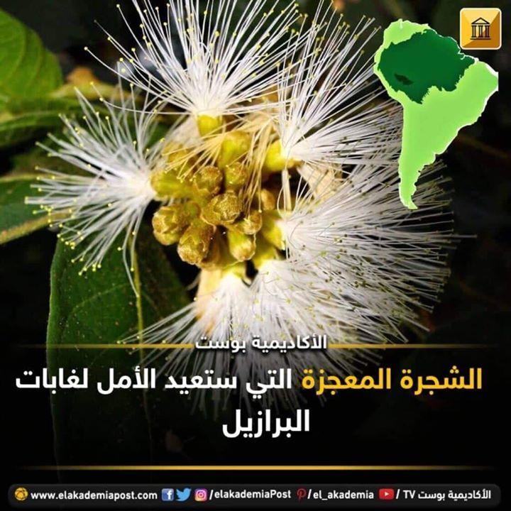 الشجرة المعجزة التي ستعيد الأمل لغابات البرازيل لنتعرف على نوع معين من الأشجار يسمى الإنغا ذو معدل نمو سريع وأوراق وارفة وثمرة قابل Plants Flowers Dandelion