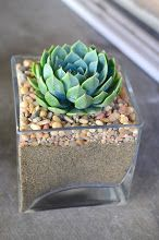 Photo: Modern cube. This is a small-medium cube, can do a large one with a single succulent adorned by pebbles and sand. $30