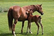 Mother and Foal. 🌸❤️ Anya és Csikója. 🌸❤️