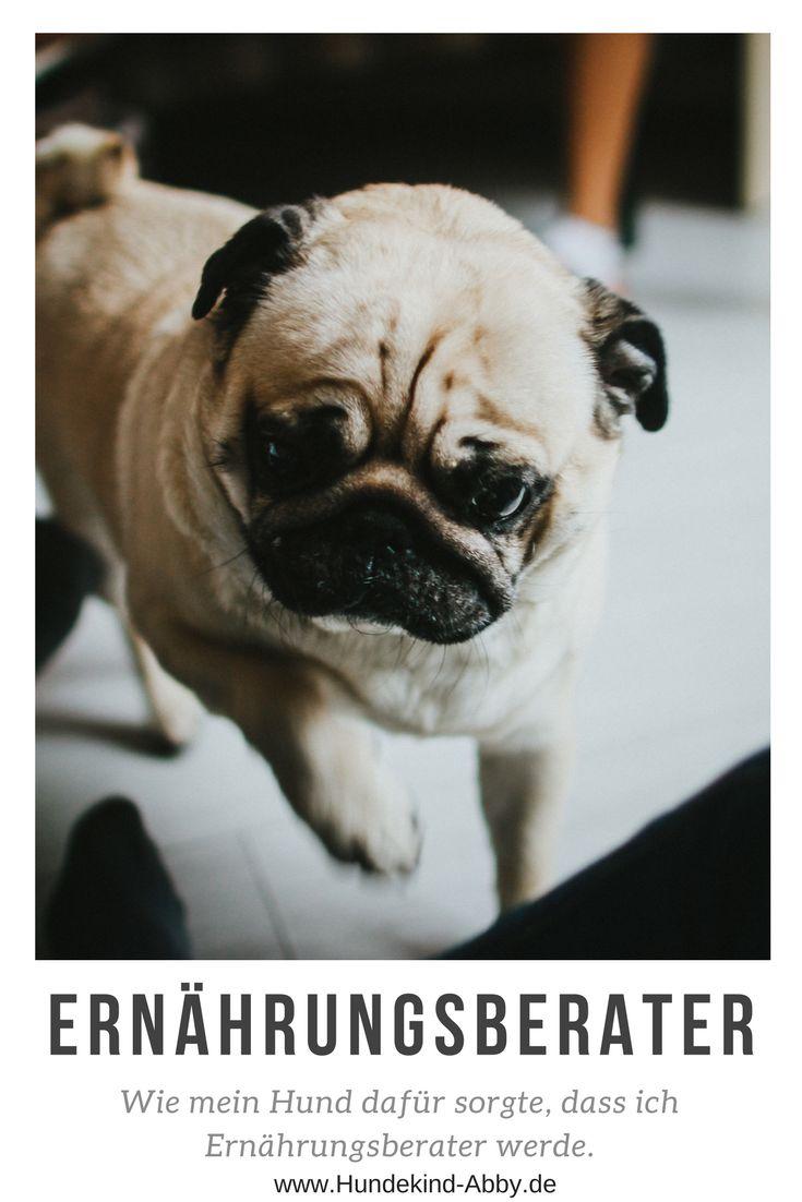 Der Hund Als Berufung Wie Abby Meinen Beruflichen Werdegang Umkrempelte Hunde Hund Unterwegs Und Arbeitshunde
