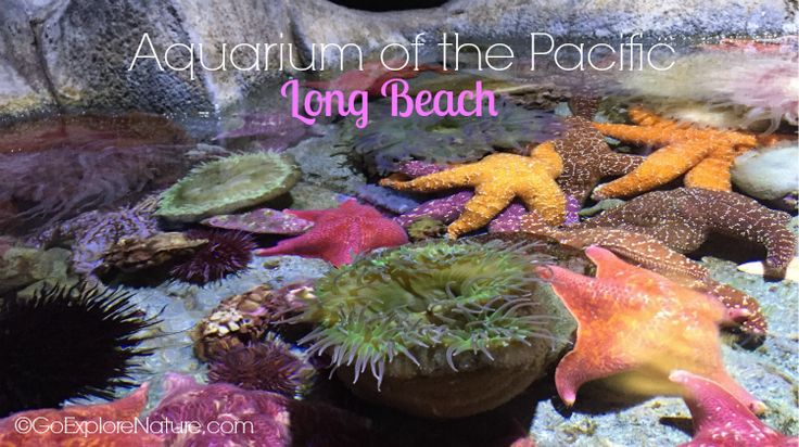 This family friendly guide to visiting the Aquarium of the Pacific in Long Beach will ensure you make the most of your visit with kids.