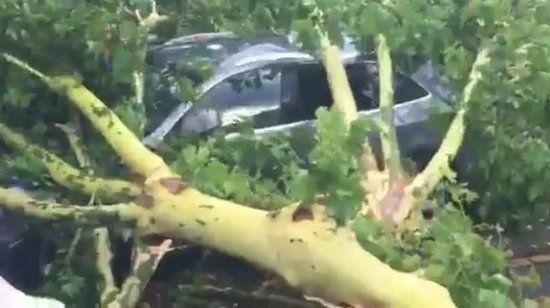 Cinq platanes se sont effondrés sur cinq véhicules à Pézenas, dans l'Hérault, suite aux orages et aux fortes rafales de vents mercredi 28 juin 2017 en début de soirée.