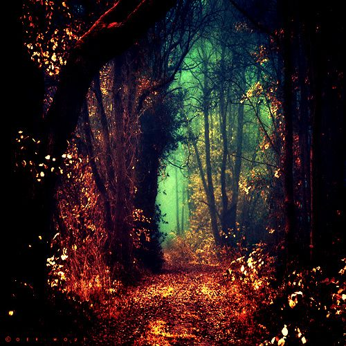#trees #forest #path #magic #enchanting