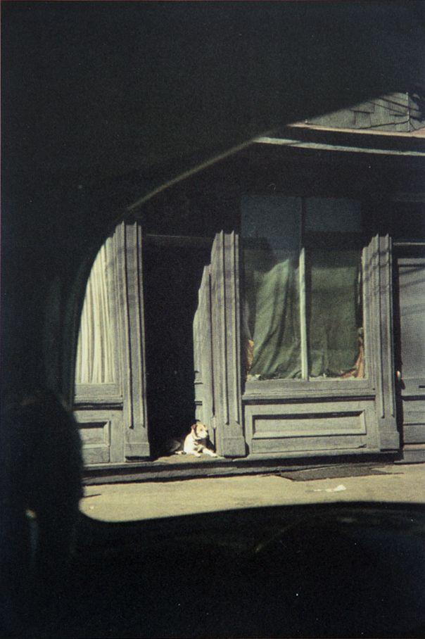 Dog in Doorway, Paterson - Saul Leiter, 1952.