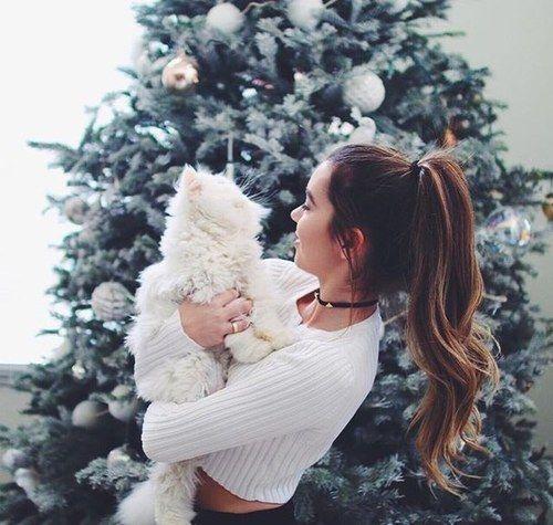christmas, cat, and winter-bilde