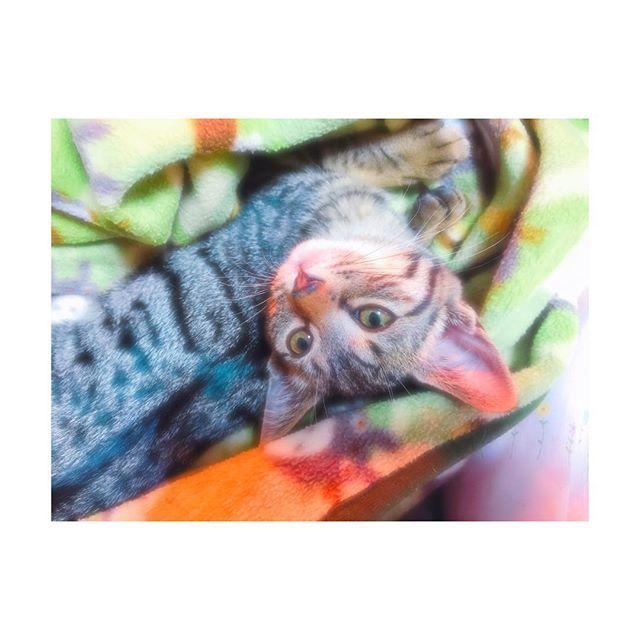 Love. . 病院Day. 体重も標準、熱もなし。 血液検査も問題なし。 . 一応、ノミダニのお薬も首元に付けてくれて あとは取れ次第、検便してもらって回虫検査と 1回目のワクチンは一週間後の予定。 . #猫 #にゃんこ #愛猫 #ねこ部 #新しい家族 #可愛い #猫好き #にゃんすたぐらむ #cat #cats #newfamily #cute #catlover #catstagram #instacat #love