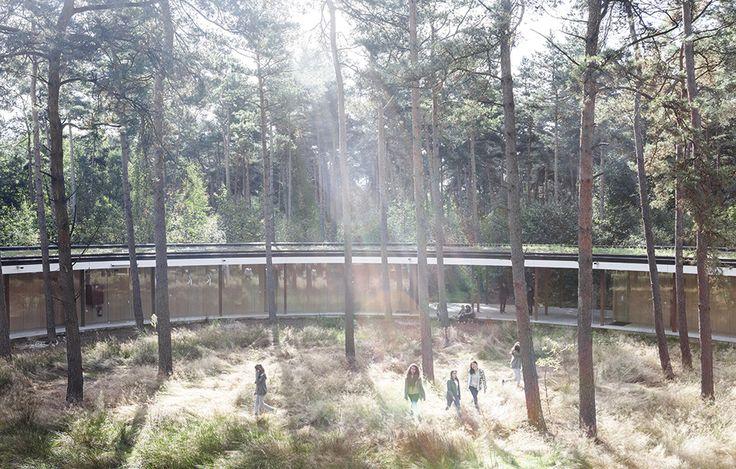 Lägmält vandrarhem av Secchi & Viganò, foto Frederik Buyckx – http://www.tidningentra.se/notiser/ett-o-bland-tallarna #arkitektur i #trä