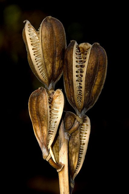 Seed pods at Kew   by Andrew Withey
