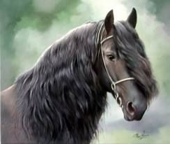 friese paarden - Google Search
