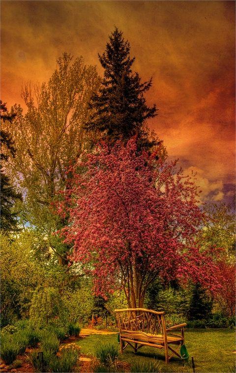 [The enchanted garden Reader Rock Garden, Calgary, Alberta, Canada | Top 20 Beautiful Nature & Places In Canada.]   ...