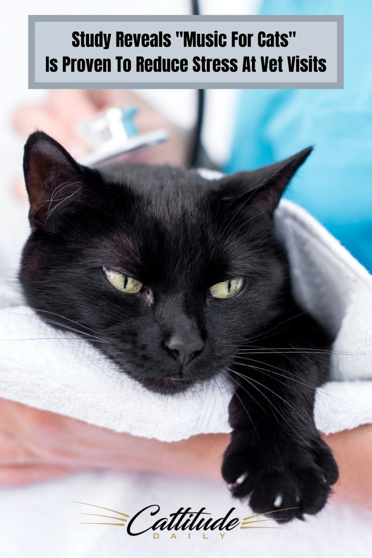 Vet Visits Are Often Dreaded By Both Cats And Cat Owners But With Music For Cats It S Been Scientifically Proven To Help Ease Cat In 2020 Cats Cat Problems Cat Care