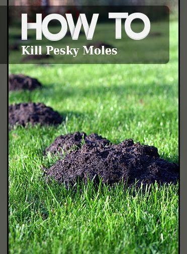 27 Besten Moles Nasty Bilder Auf Pinterest G Rtnern