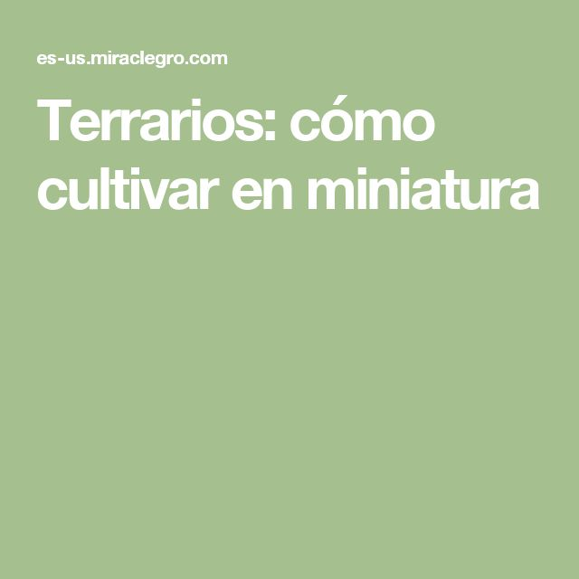 Terrarios: cómo cultivar en miniatura