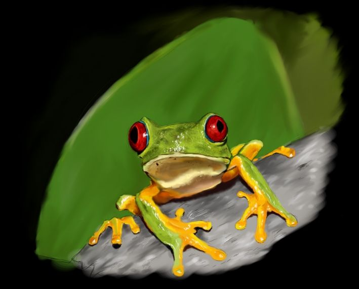 Tree frog from amazonas rain forest - digital drawing