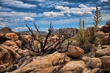 Desert Southwest Landscape with Dead Tree