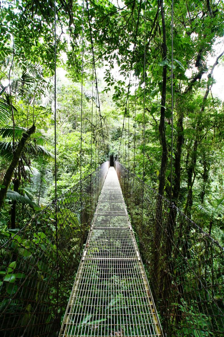 Hanging Bridges Are A Great Way To View Wildlife That Live In The Canopy Of The Rainforest. La Fortuna / Arenal, Costa Rica