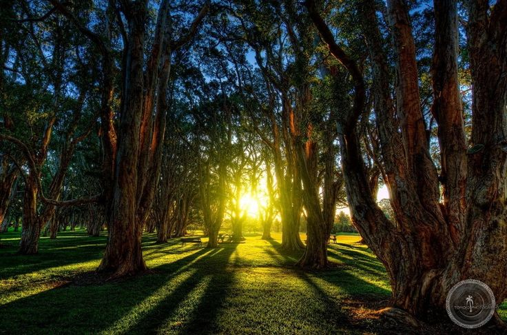 Centennial Woodlands. by Toma Iakopo    Tomojo Photography on 500px
