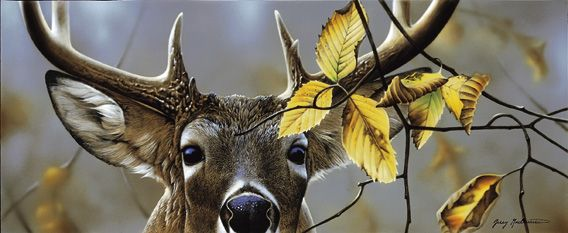 elk horn muslim personals Antlers and cut antler products bulk antler- whole deer, elk, moose and exotic bulk sheds, singles and sets, as well as bulk cut antler pieces.