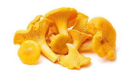Чем полезны грибы Лисички — Народная Воля