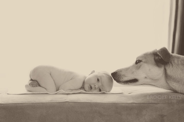 Newborn and dog  {Brooke Kelly Photography}