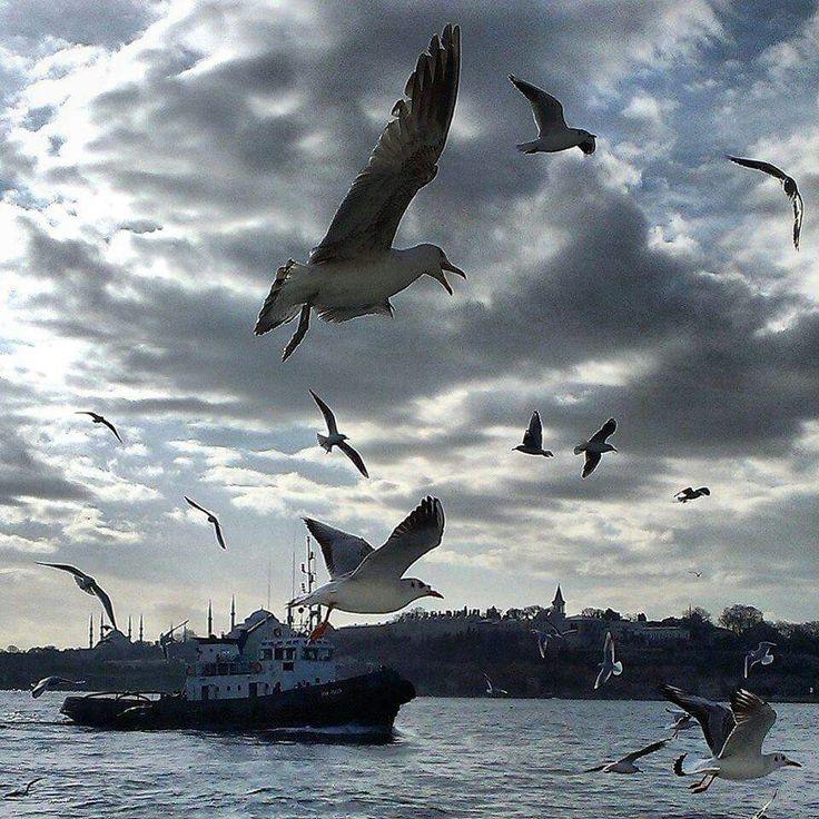 Seagulls in istanbul