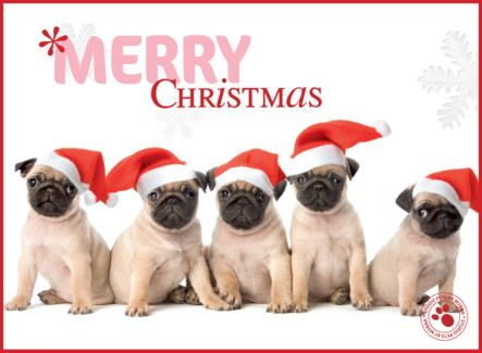 Kerstkaart met vijf hondjes met rode kerstmutsen- Greetz