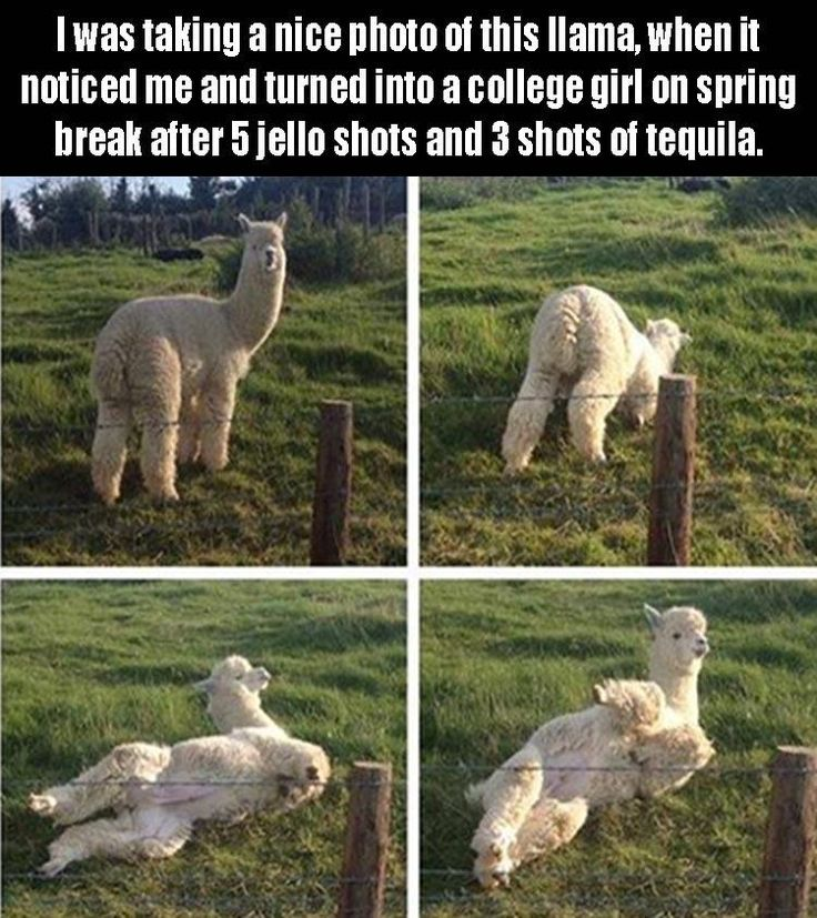 Funny Pictures Of The Day - 37 Pics