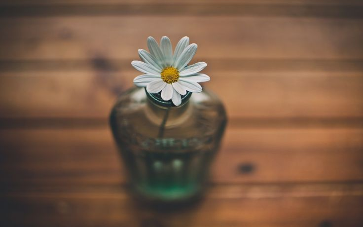 white flower daisy vase