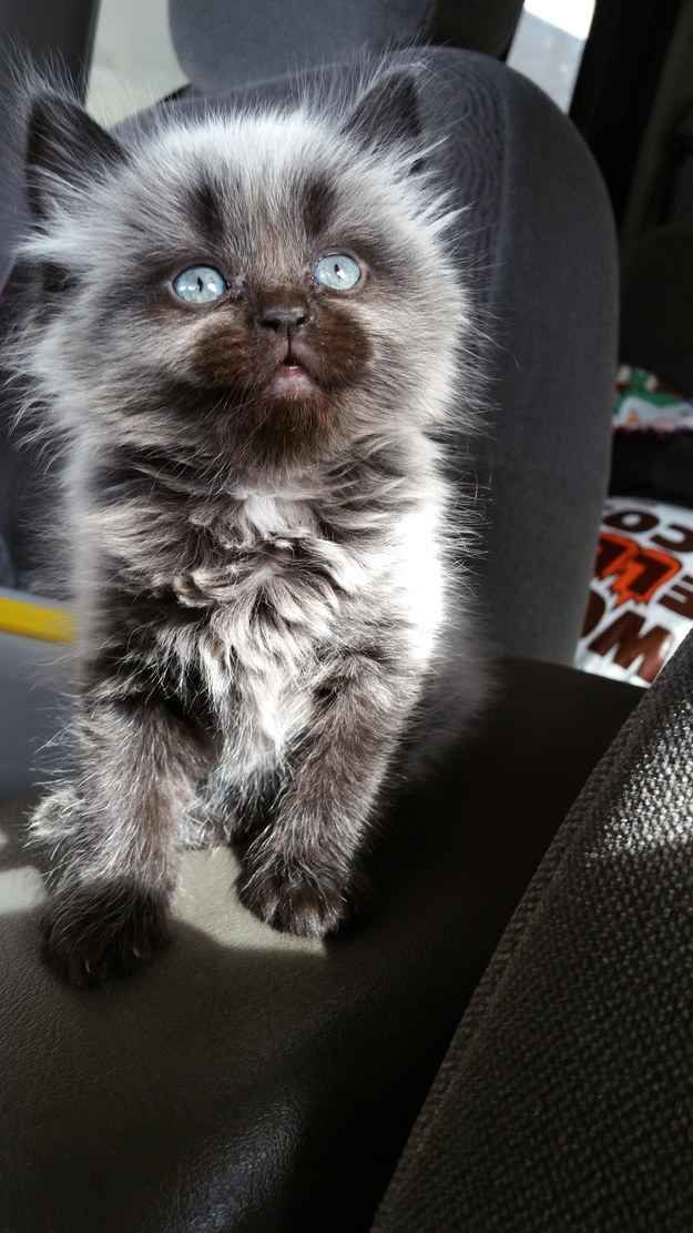 www.myhappykitty.net The kitten who holds the universe in her eyes. <---Oh my Holy roman empire I want this cat, can I has? Please?http://pinterest.com/pin/454863631096135750/